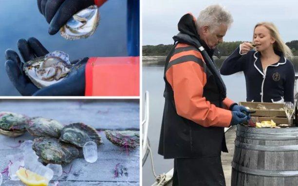Viltfangede østers fra Grebbestad – et velsmakende håndverk